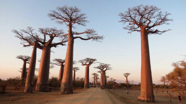 Découvrir Madagascar dans toutes ses facettes